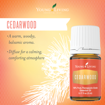 cedarwood.png